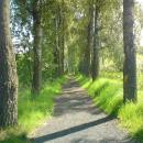 Path to park. - panoramio